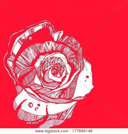 flower, rose, spring, summer, background, botanical, garden, art, nature