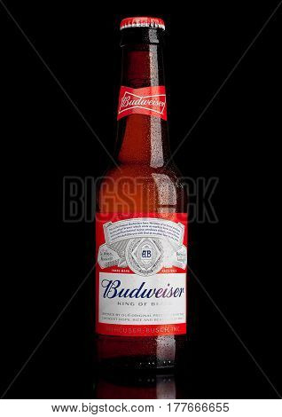 London,uk - March 21, 2017 : Bottle Of Budweiser Beer On Black Background, An American Lager First I