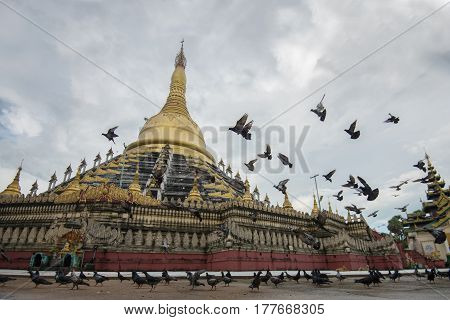 Mahazedi paya with pigeon the largest pagoda in bago myanmar