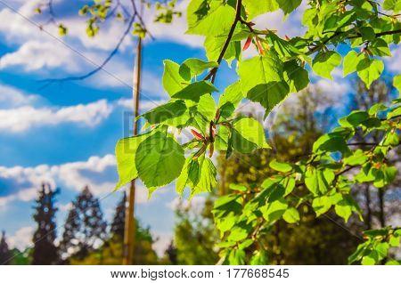 Linden Branch
