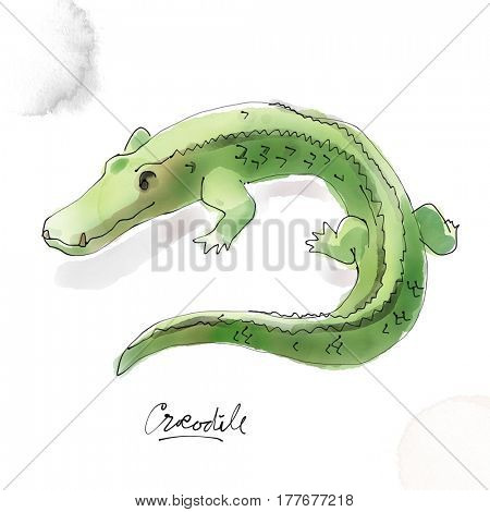 Crocodile  Watercolor animal drawing collection
