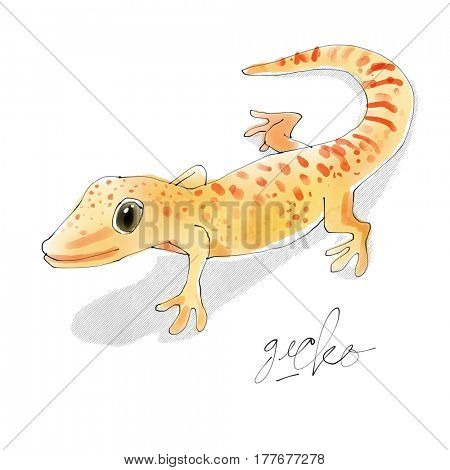 Gecko. Watercolor animal drawing collection