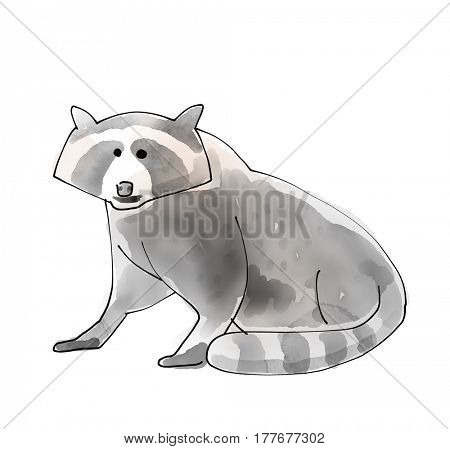 Racoon Watecolor Animal illustration set