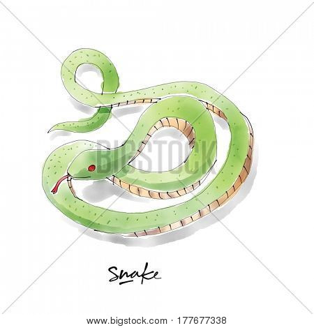 Snake. Watercolor animal drawing collection