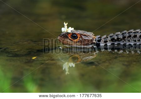 Mantis and croc playing on te water