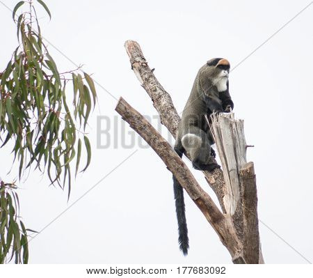Image of a monkey sitting on the dried tree