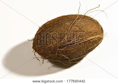Ripe brown coconut fruit tree isolated on white background.