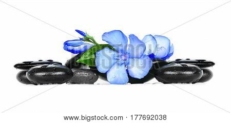 Spa stones and oleander flowers over white background. Spa concept.