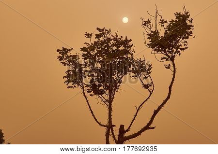 Khamsin in Cairo A tree and the Sun view in Cairo during sandstorm caused by Khamsin in April, 2015