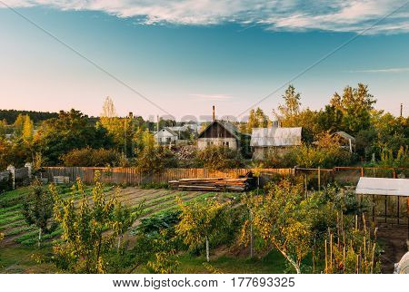 Vegetables Growing In Raised Beds In Vegetable Garden In Vallage At Summer Season. Vegetable Beds At Sunset Or Sunrie Time