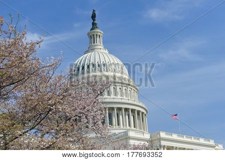 Washington DC in springtime - United States Capitol building