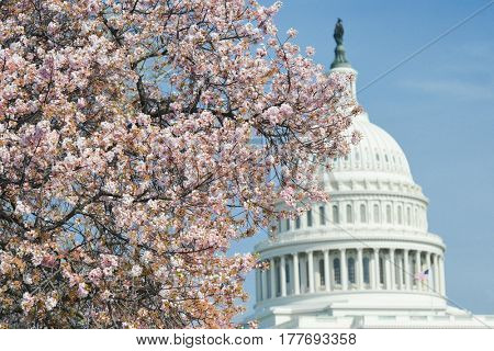 United States Capitol in springtime - Washington DC