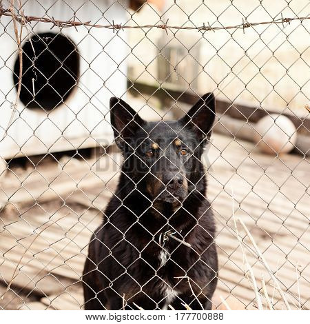 Dog locked in the cage behind barbed wire fence waiting for adoption