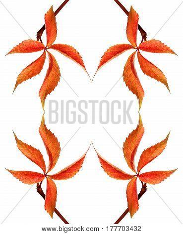Frame Of Red Autumnal Grapes Leaf