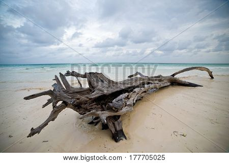 snag on the shore of the ocean