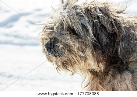 Muzzle of Homeless shaggy dog . Portrait 1