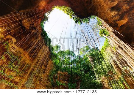Sunbeams penetrating in opening of cenote in the form of heart with hanging roots