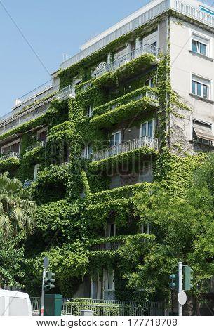 dwelling big house in greenery in summer