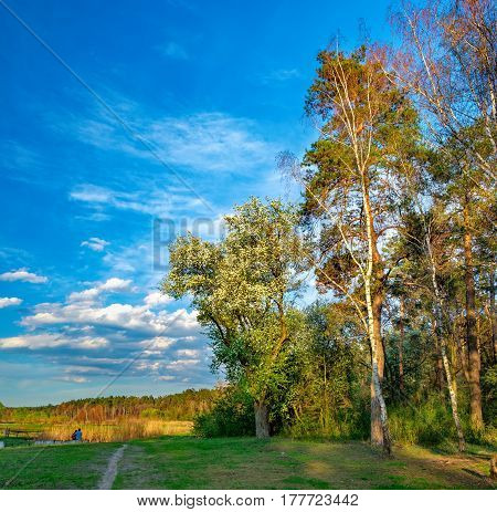 Tall old trees i mixed deciduous-coniferous forest with birch pine blooming lilacs in the foreground, Irpen, Ukraine. The edge of the spring forest in the evening sun. Young couple admiring nature