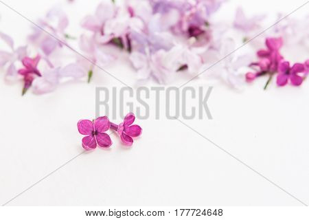 blossoming purple spring lilac flowers on white background. Flat lay. Concept of freshness and beautifulness. DOF on lilac flower. minimalistic hi key picture of blossoming plant. empty space for text
