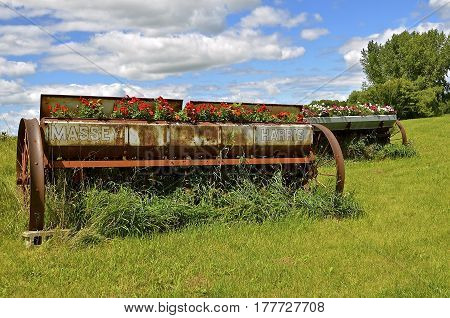 LAKE PARK, MINNESOTA, September 26,2016:Old the Massey Harris Massey name on the rusty grain grill being used as a flower box  disappeared when a merger of Massey Harris and the Ferguson Company farm machinery manufacturer occurred in 1953, to become Mass