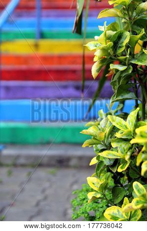 Travel To Istanbul, Turkey. The View On The Rainbow Stairs With The Plant On The Foreground.