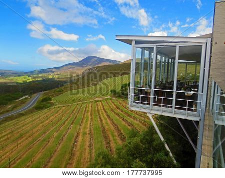 Vineyard View from La Vierge Winery South Africa October 2014