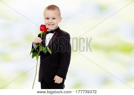 Beautiful little boy in a strict black suit , white shirt and tie.Boy holding a flower of a red rose on a long stem.Summer white green blurred background.