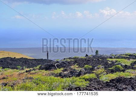 Green Vegetation On An Old Lava Flow Field By The Ocean In Volcanoes National Park, Big Island Of Ha