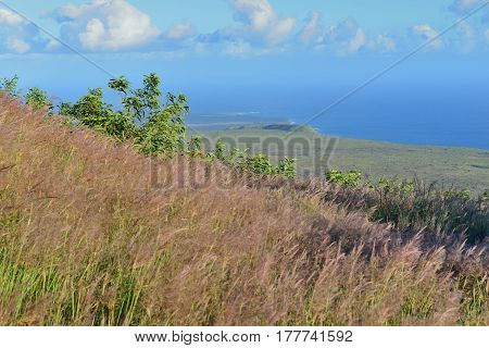 Tall Grass On An Old Lava Flow Field By The Ocean In Volcanoes National Park, Big Island Of Hawaii