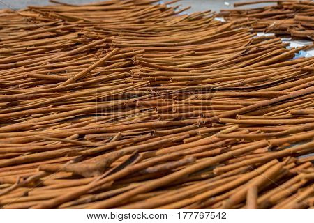 Fresh Cinnamon sticks out in the street drying in the midday sun. Low angle depth of field shot.