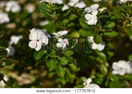 White Pelleted Flowers