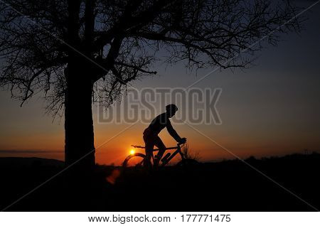 Cyclist ride a bike in sunset under a big tree. Silhouette on cyclist and tree