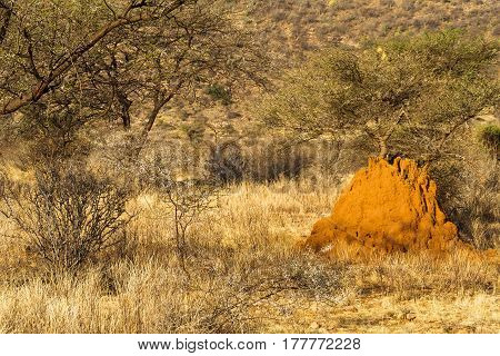 Large termitary in savanna. Samburu national park, Kenya