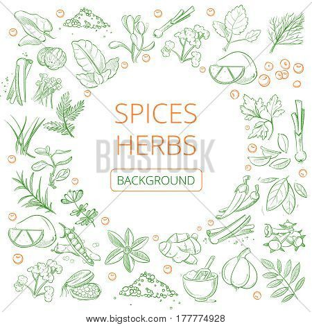 Hand drawn herbs and spices vector healthy natural plants background. Banner with spice aroma, illustration of various spices herb