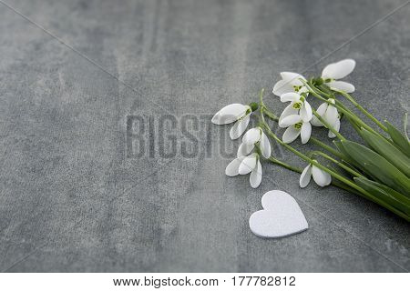 Bouquet Of Snowdrops On Gray Stone  Background With Copy Space For Message. First Spring Flowers. Gr