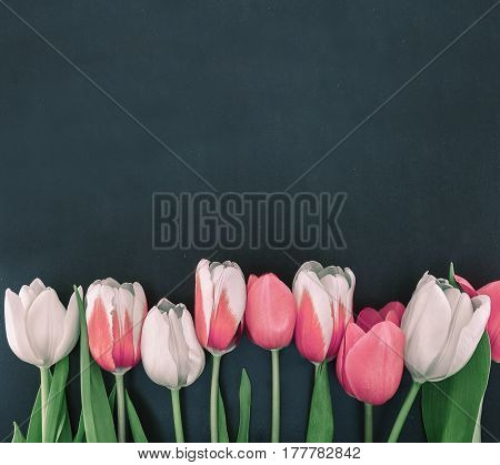 Frame Of Tulips On Black Stone Background With Copy Space For Message. Spring Flowers. Greeting Card