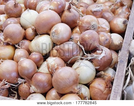 detail of onion at market in italy
