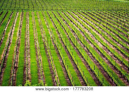 winery green field landscape. Location: New Zealand