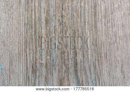 High resolution old obsolete rustic timber surface with some blue paint