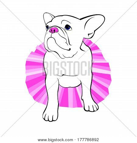 bulldog, dog, animal, french, vector, illustration, pet, breed, cute, drawing, puppy