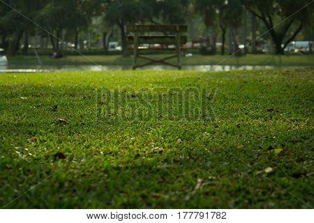 garden photography  at playground in Bangkok Thailand