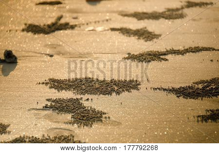 Golden sand beach and glitery bokeh lights background.Blured background.