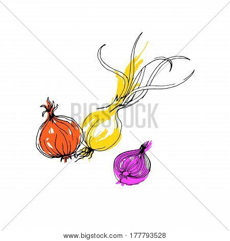 onion, food, vector, vegetarian, organic, healthy, vegetable, fresh