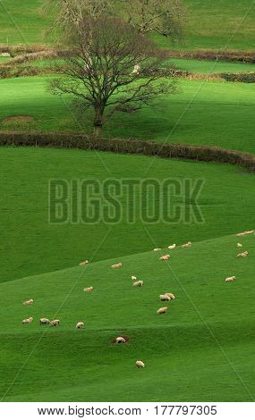 Farmland in Blackdown Hill AONB (Area of Outstanding Natural Beauty) in Devon England