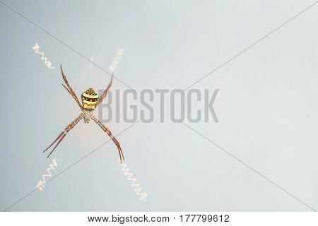 Closeup colorful spider on cobweb on blurred glass textured background with copy space