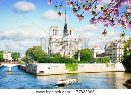 Notre Dame cathedral church over the Seine river at spring day, Paris, France