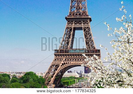 famous Eiffel Tower details close up with spring bloom, Paris, France