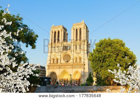 facade of famous Notre Dame cathedral at spring day, Paris, France