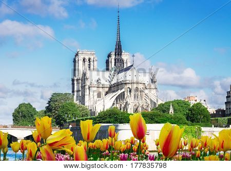 Notre Dame cathedral and Cite island over the Seine river at spring day, Paris, France,
